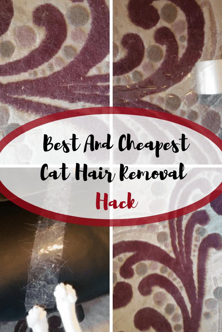 Best To Remove Pet Hair From Carpet Carpet Vidalondon