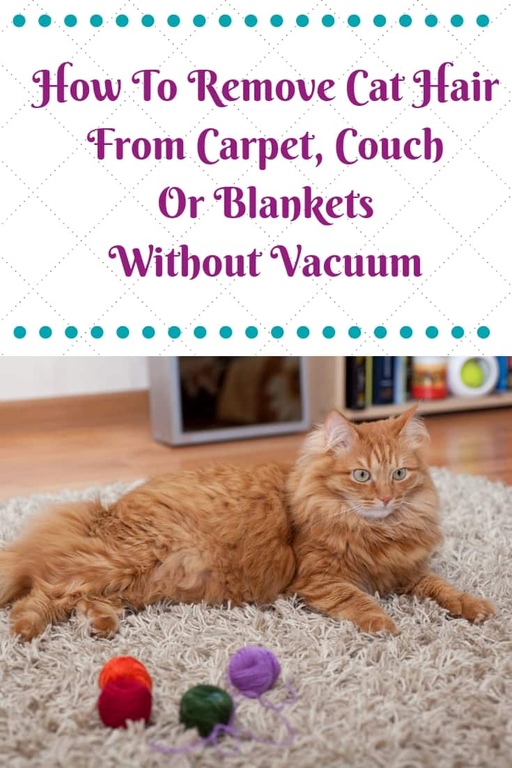 How To Remove Cat Hair From Carpet Without Vacuum