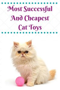 Soft Balls Cat Toys - A Must Have Cat Toys