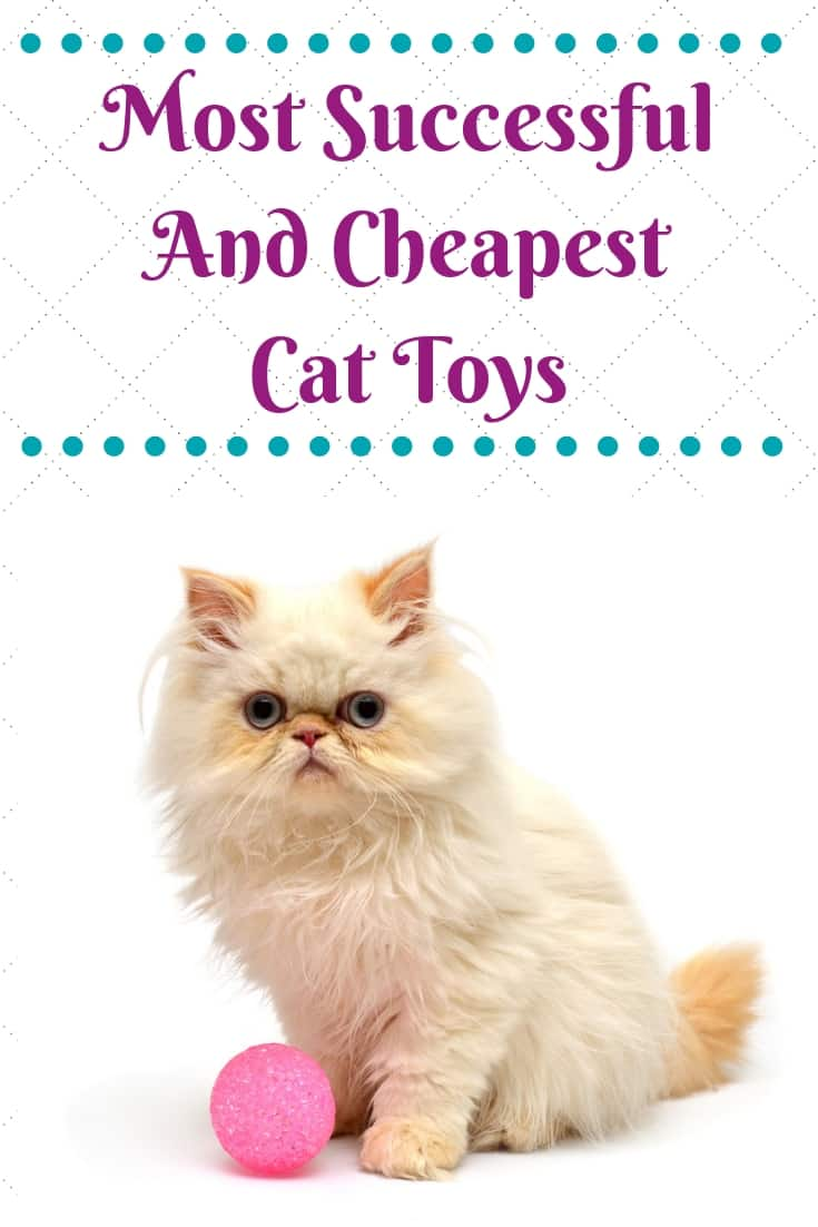 Soft Balls Cat Toys - A Must Have Cat Toy