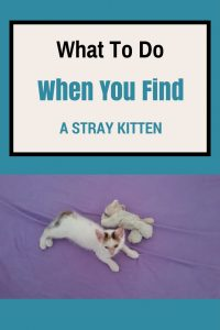 What-To-Do-When-You-Find-A-Stray-Kitten