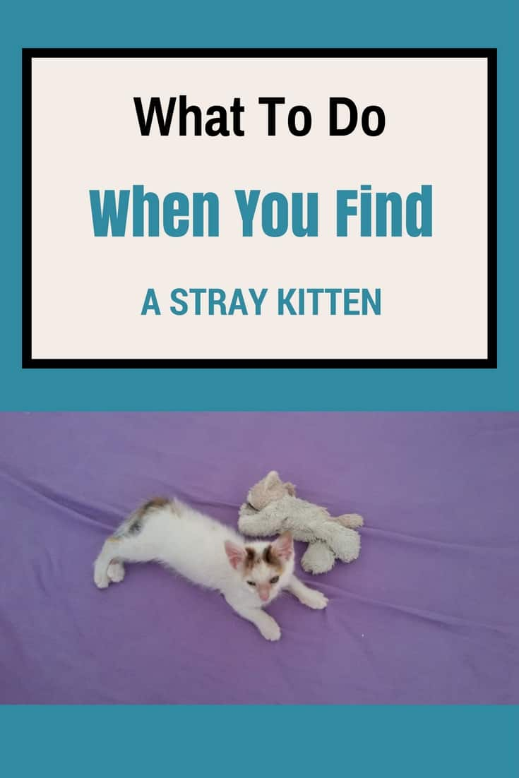 What To Do When You Find A Stray Kitten?