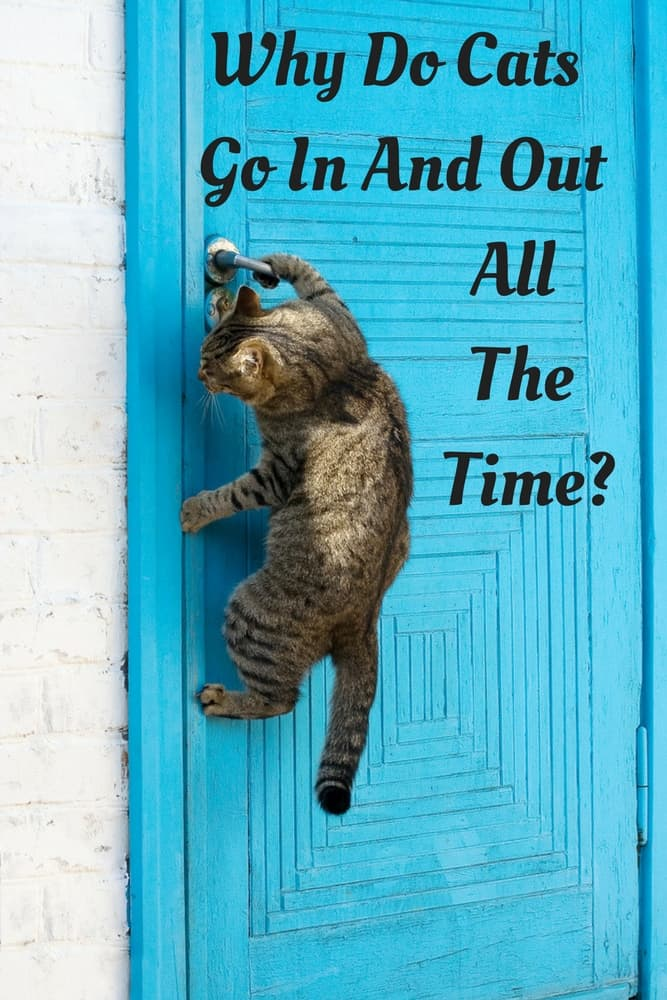 Why Do Cats Go In And Out All The Time