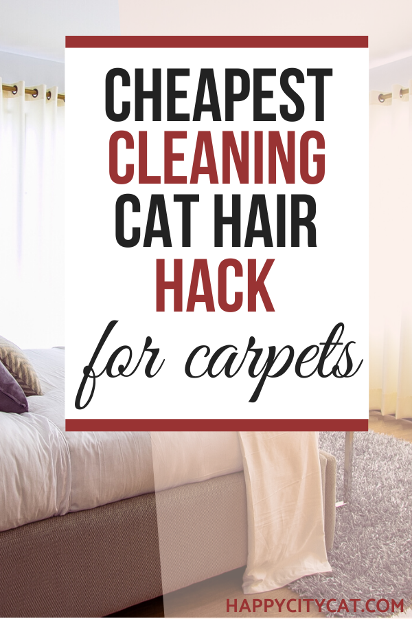 How To Get Cat Hair Out Of Carpet