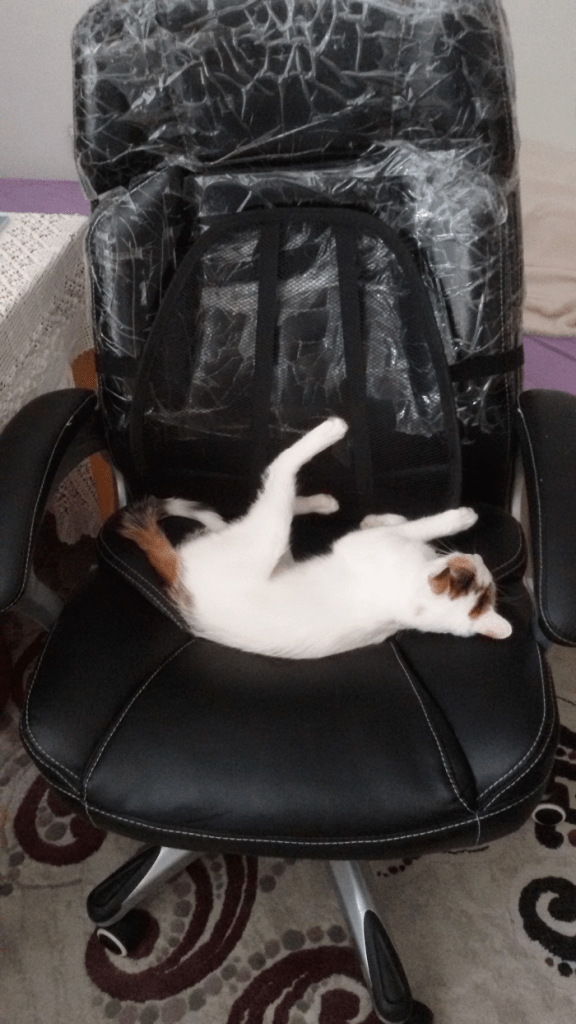 diy-remove-cat-hair-office-chair