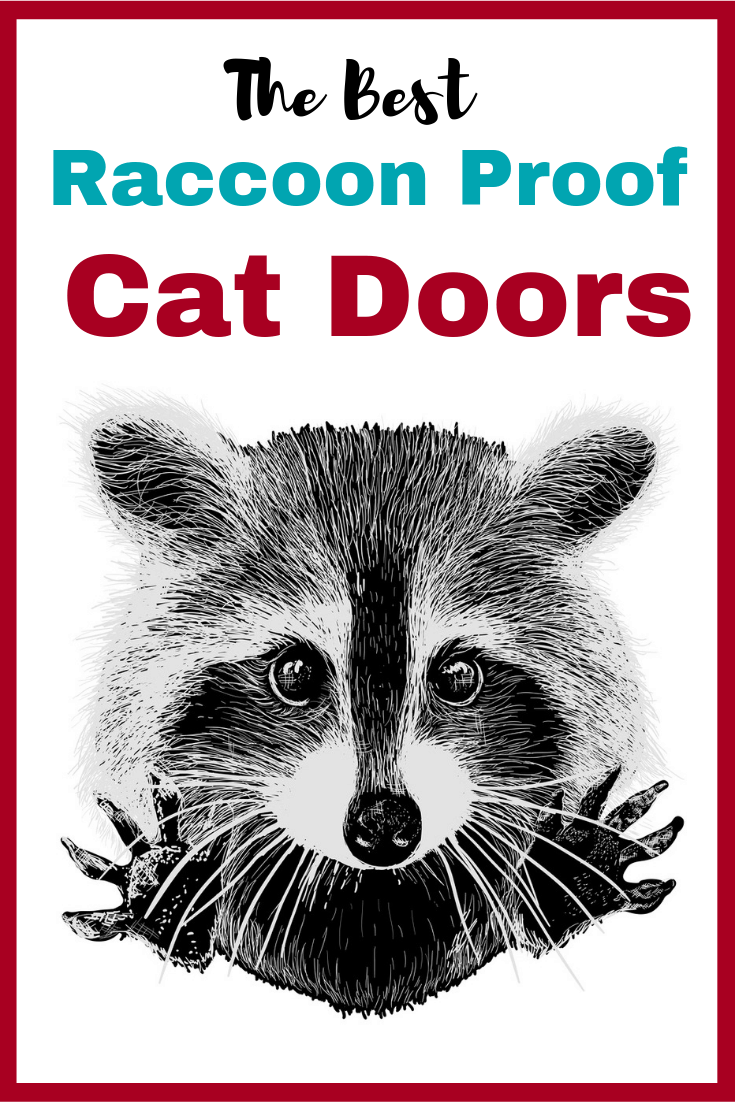 Raccoon Proof Cat Doors That Really Work