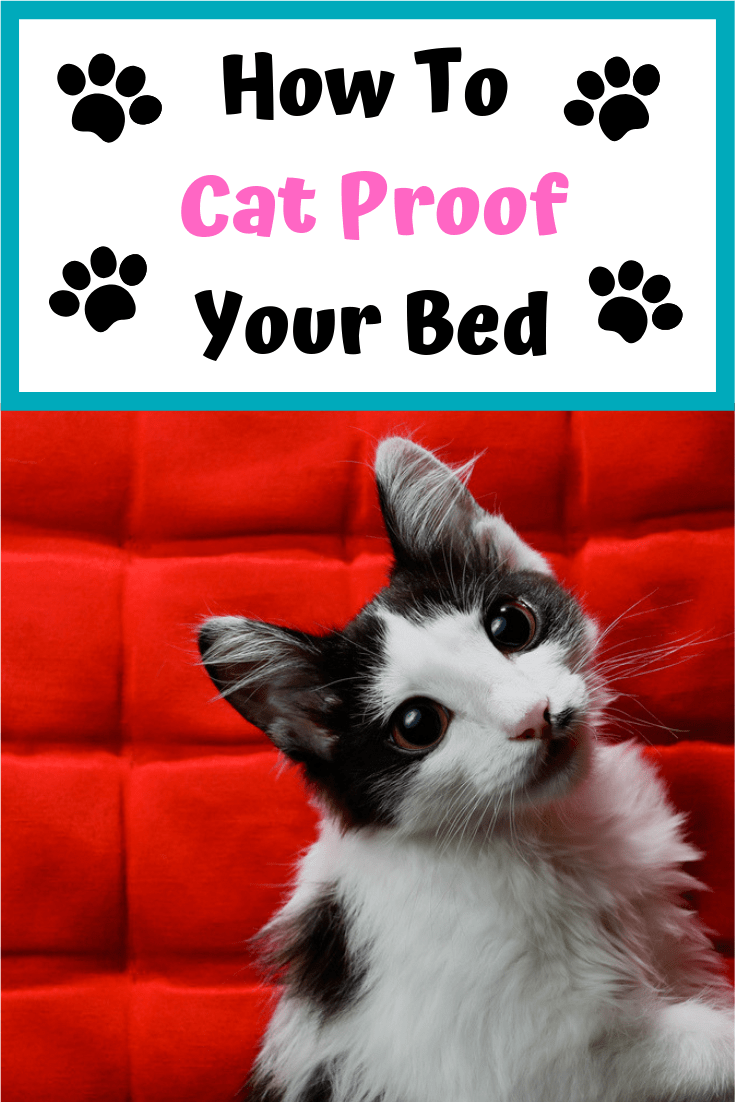 Cat Proof Bed Cover