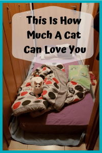 This Is How Much A Cat Can Love You