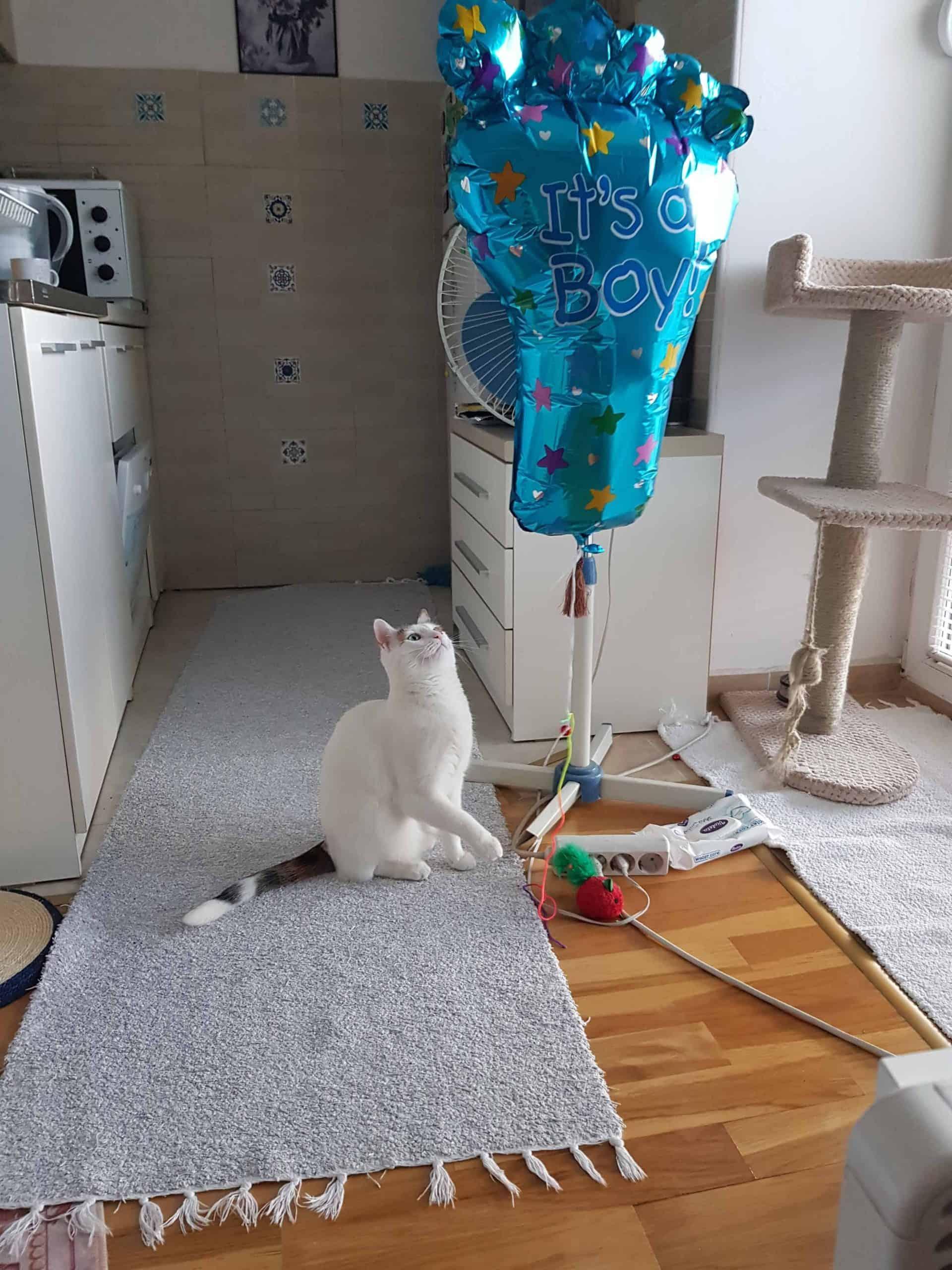 balloon cat toy