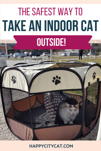 Taking Indoor Cats Outside - The Safest Way!