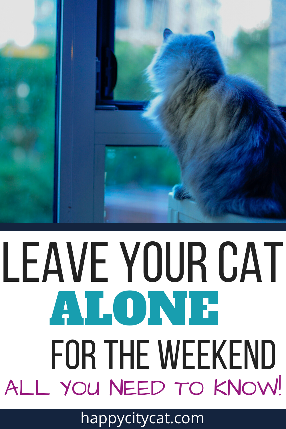 Leave Cat Alone For Weekend - All You Need To Know