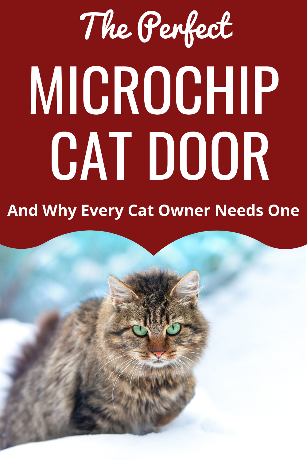 Dualscan Microchip Cat Flap Review (Cat Door In Window)