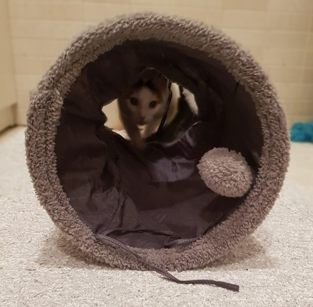 cat ball tunnel toy