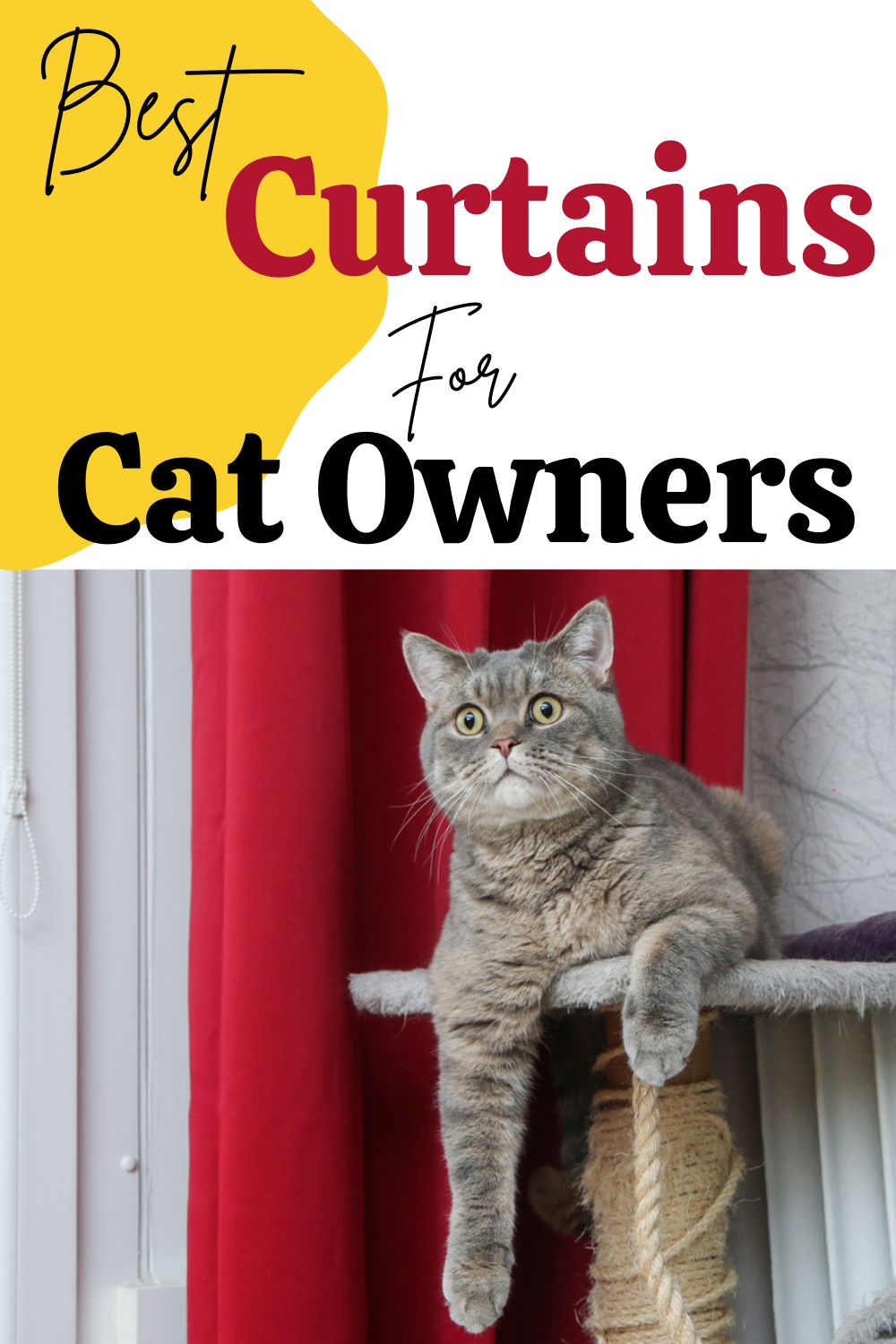Cat Proof Curtains - Best Tips What To Look For