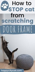 stop cat scratching door frame