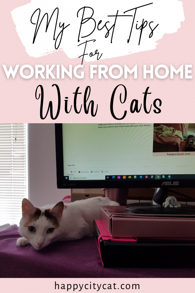 Working-From-Home-With-Cats