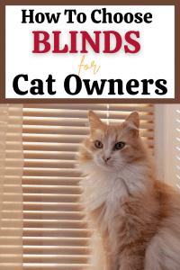 cat proof window blinds